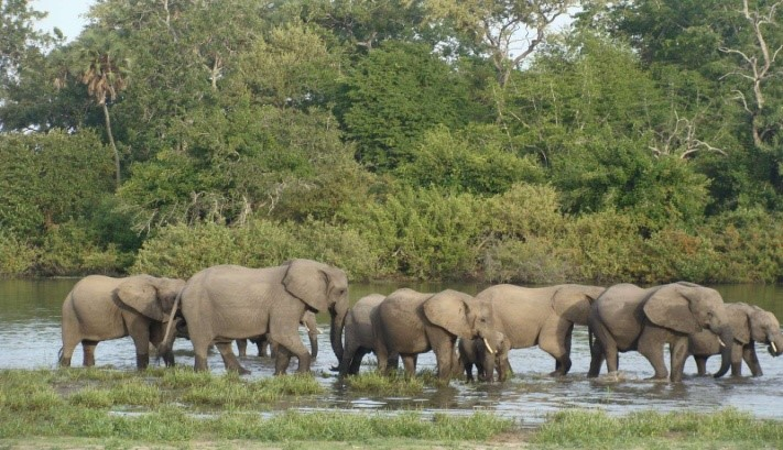 Day 2: Early morning walking safari and afternoon game drive in Nyerere National Park