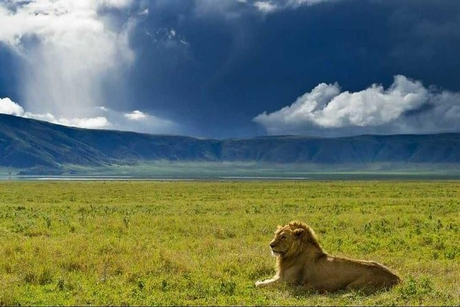 Day 2: NGORONGORO CRATER